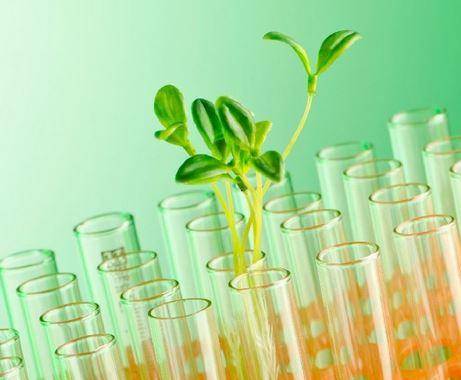 Polimeri biodegradabili